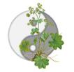 Praxis für Akupunktur und Pflanzenheilkunde